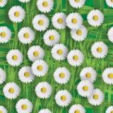 De bloemen van Daisy royalty-vrije illustratie