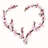 De bloemen van de abrikoos Royalty-vrije Stock Foto