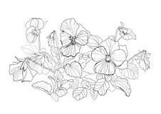 De bloemen van de altviool Royalty-vrije Stock Afbeelding