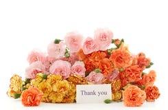 De bloemen van de anjer Royalty-vrije Stock Fotografie