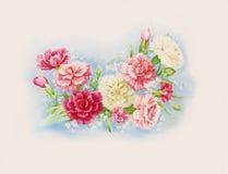 De bloemen van de anjer Stock Afbeeldingen
