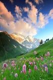 De bloemen van de berg Stock Foto's