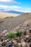 De bloemen van de berg royalty-vrije stock afbeeldingen