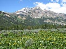 De Bloemen van de berg stock afbeeldingen