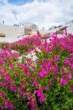 De bloemen van de bergtrots in Bloei Stock Afbeelding