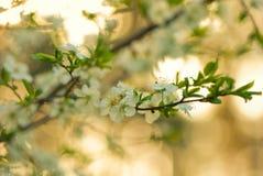 De bloemen van de boom stock foto