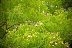 De bloemen van de boom Stock Afbeelding