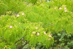 De bloemen van de boom stock fotografie