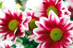 De bloemen van de bos Stock Foto