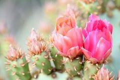 De bloemen van de cactus Stock Foto's