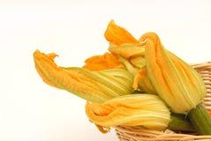De bloemen van de courgette royalty-vrije stock afbeeldingen