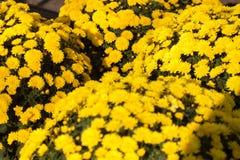 De bloemen van de Dag van alle Zielen Royalty-vrije Stock Fotografie