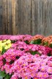 De bloemen van de daling Royalty-vrije Stock Afbeeldingen