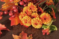 De bloemen van de dalingschrysant Royalty-vrije Stock Fotografie