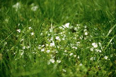 De bloemen van de de lentetijd in Moskou Stock Foto's