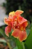 De bloemen van de de zomerkleur Royalty-vrije Stock Afbeeldingen