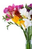 De bloemen van de fresia Royalty-vrije Stock Foto's