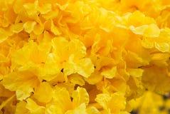 De bloemen van de gouden Trompetboom royalty-vrije stock afbeelding