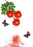 De bloemen van de goudsbloem Stock Afbeeldingen