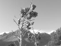 De bloemen van de Gualdelupeberg royalty-vrije stock foto