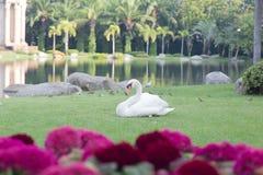 De bloemen van de hanekam Royalty-vrije Stock Fotografie