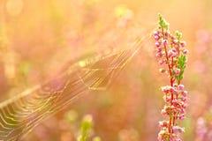 De bloemen van de herfst Stock Foto's