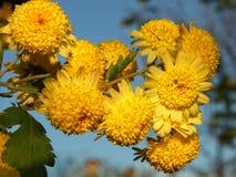 De bloemen van de herfst Vector vakantiekaart Stock Foto