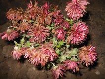 De bloemen van de herfst Vector vakantiekaart Royalty-vrije Stock Foto