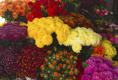 De bloemen van de herfst Vector vakantiekaart Stock Foto's