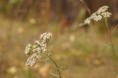 De bloemen van de herfst Vector vakantiekaart Stock Afbeeldingen
