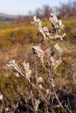 De bloemen van de herfst Vector vakantiekaart Het noordenweide in daling Stock Fotografie