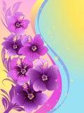 De bloemen van de hibiscus Stock Foto's
