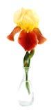 De bloemen van de iris Stock Afbeeldingen