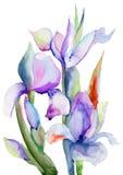 De bloemen van de iris Stock Afbeelding
