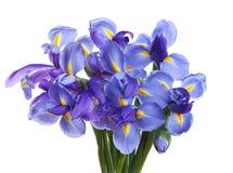 De bloemen van de iris Royalty-vrije Stock Afbeeldingen