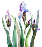 De bloemen van de iris, waterverfillustratie Stock Afbeeldingen