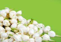 De bloemen van de jasmijn royalty-vrije stock afbeelding