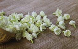 De bloemen van de jasmijn Stock Foto