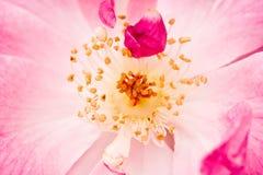 De bloemen van de kern Stock Foto's
