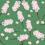 De bloemen van de kers Stock Afbeeldingen