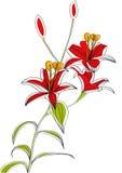 De bloemen van de lelie royalty-vrije illustratie