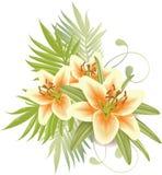 De bloemen van de lelie Stock Foto's