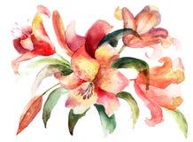 De bloemen van de lelie, waterverfillustratie Royalty-vrije Stock Foto's