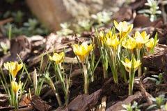 De bloemen van de lente Royalty-vrije Stock Foto's