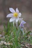 De bloemen van de lente Stock Afbeeldingen