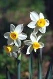 De bloemen van de lente stock foto