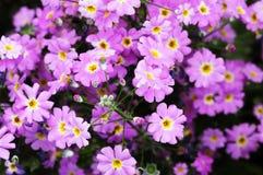 De bloemen van de lente Stock Foto's
