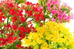 De bloemen van de lente Stock Afbeelding