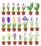 De Bloemen van de lente in de Potten van de Bloem Irissen, lelies van vallei, tulpen, narcissuses, krokussen en andere sleutelblo vector illustratie