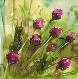 De bloemen van de lente in de weide Stock Foto's